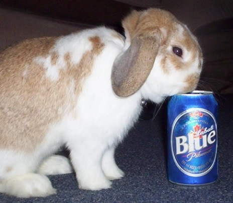 images_cute_rabbit_drinking_beer