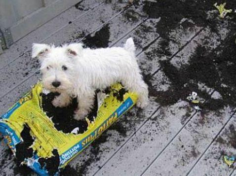 images_funny_dog_making_a_mess