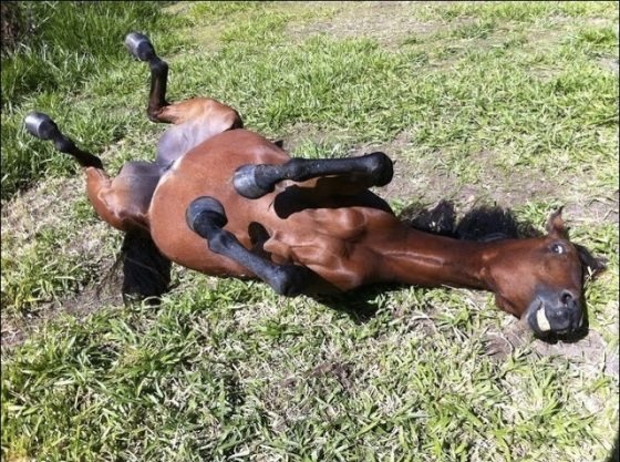 images_happy_horse