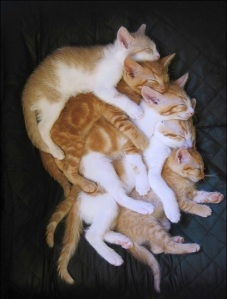 images_cute_kittens_pile_up