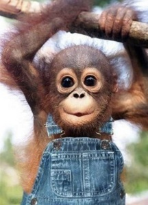 images_cute_monkey_hanging_around