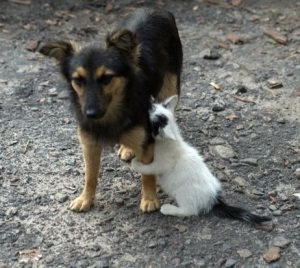 images_dog_and_cat_forgiveness
