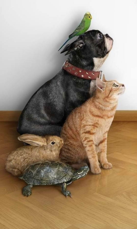 images_funny_animals_together