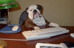 images_funny_bulldog_using_computer