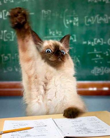 images_funny_cat_raising_hand