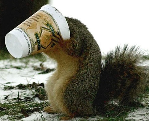 images_funny_squirrel_coffee