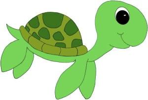 images_little_turtle