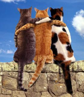cats-friends-greetings