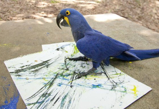 images_clever_parrot_painting