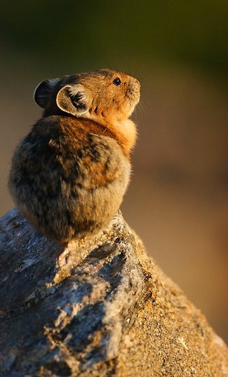 images_cute_mouse_watching_sunrise
