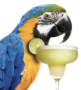 images_cute_parrot_having_margarita