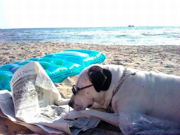 images_funny_dog_reading_newspaper_at_the_beach