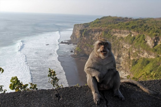 images_monkey_sitting_on_edge_of_cliff