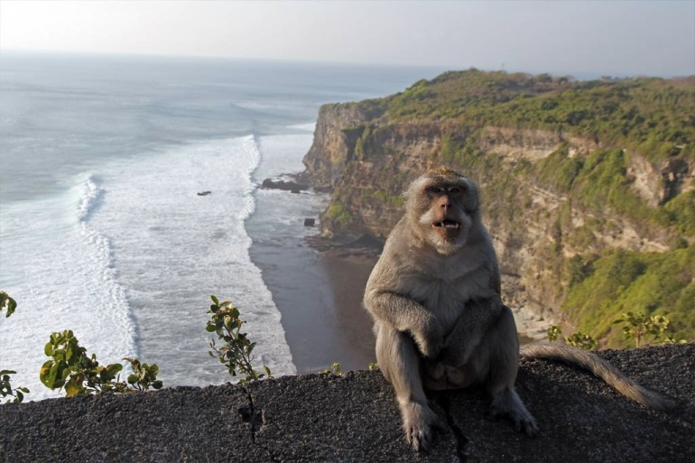 images_monkey_sitting_on_edge_of_cliff