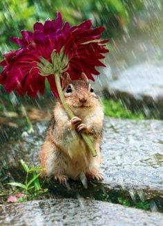 images_squirrel_holding_flower_in_rain