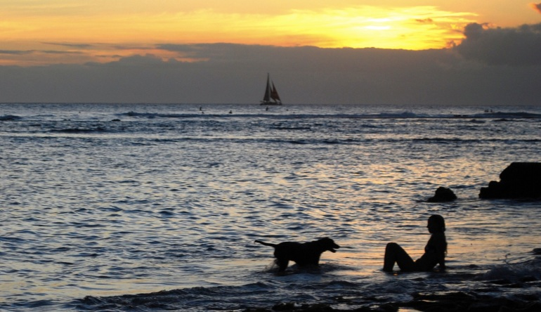 images_sunset_beach_dog_simple_life