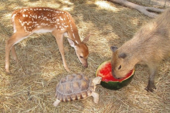 images_animals_happy_together