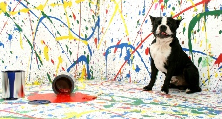 images_cute_dog_painting