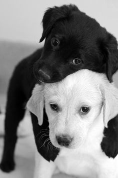 images_cute_puppies_hugging