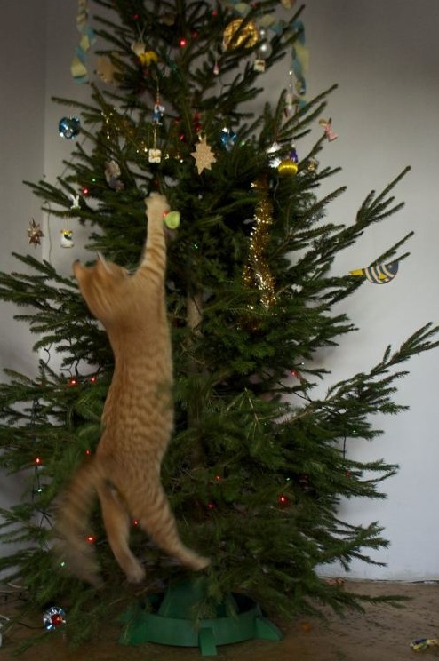 funny_cat_reaching_for_stars