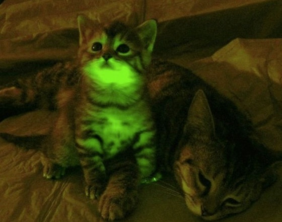 images_cute_cat_glowing