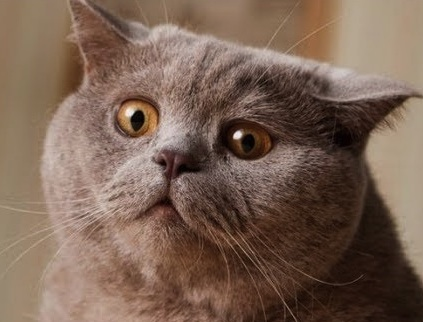 images_cute_confused_cat