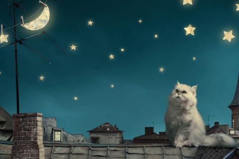 cat_and_stars_at_night