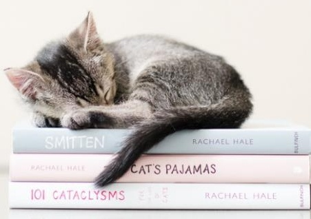 cute kitten sleeping on books