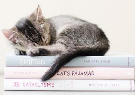 cute kitten sleeping on books