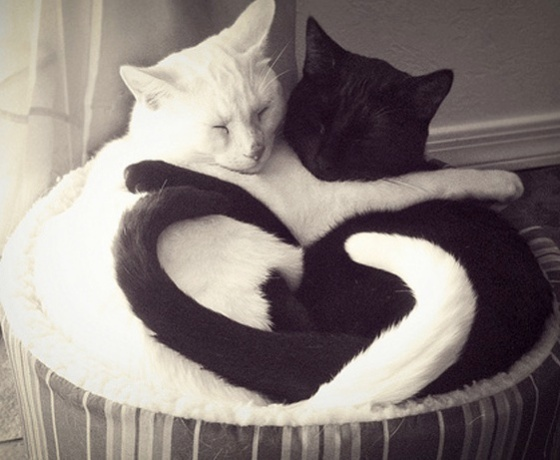 cute_cats_hugging