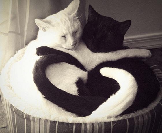 cute_cats_hugging