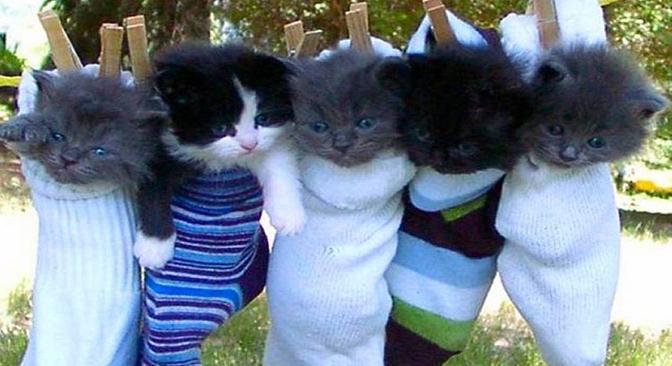 cute_kittens_free_wallpaper