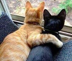 cute_black_and_tabby_cat