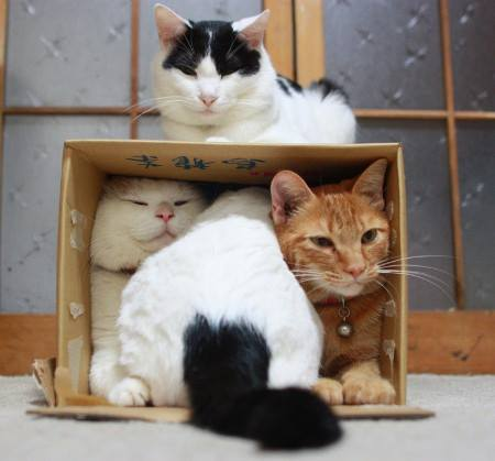 funny-cats-home-paper-box