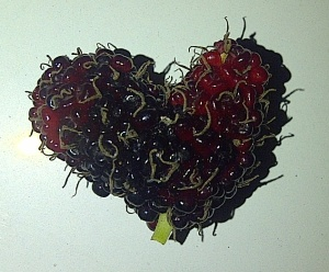 heart-shape mulberry