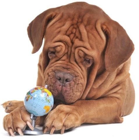 funny_dog_with_world_globe