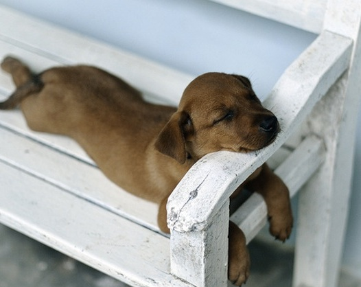 funny_dog_sleeping
