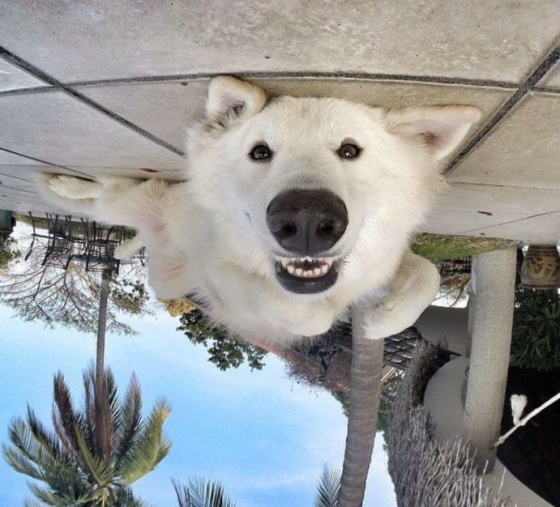 dog looking upside down