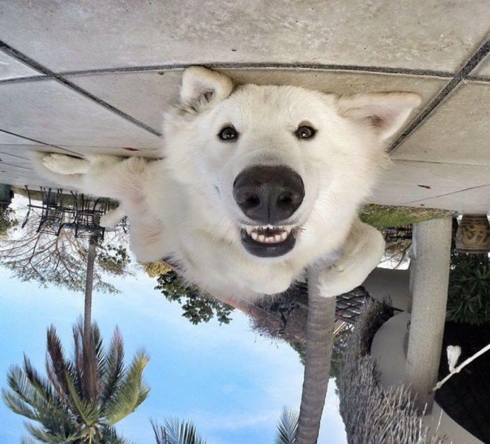 dog looking upside down