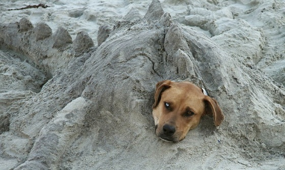 funny dog buried in sand