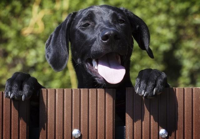 neighbour's dog