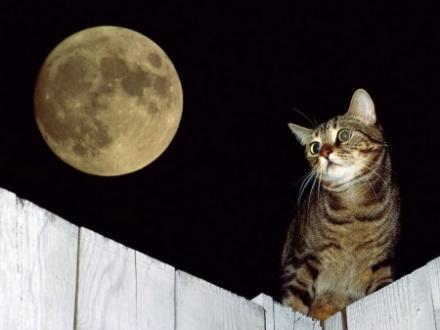 cat under the moonlight