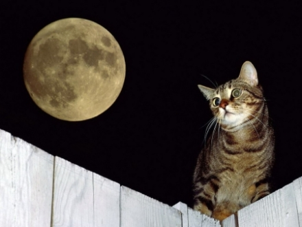cat under the moonlight