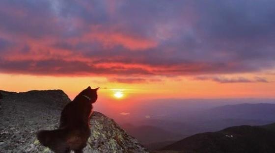 cat watching beautiful sunset