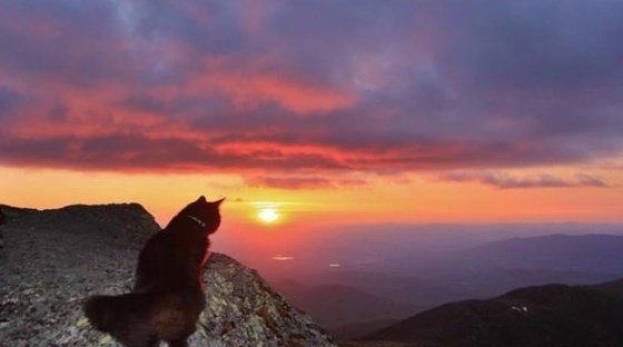 cat watching beautiful sunset