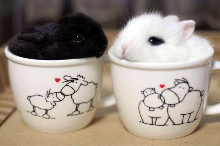 Cuteness-Explosion-Animals-In-Cups34__700
