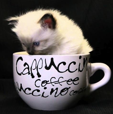 funny cat in mug