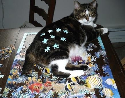 www.stuffonmycat.com