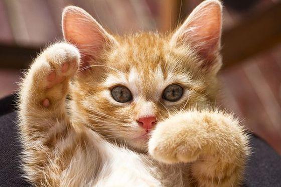 www.cathumor.net