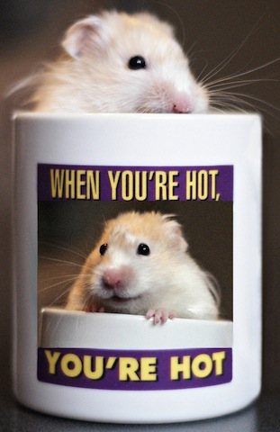 funny mouse in mug